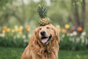Can Dogs Eat Pineapple